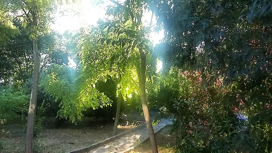 Casa Iriarte Jardín